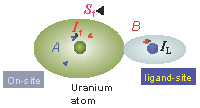 """On-site"" interaction of uranium nuclear spin (If) with magnetic 5f electrons with spin (Sf) located close       to the nucleus. The uranium atom may also be influenced by a neighboring atom (ligand)."