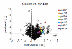 Fig. 1. C. japonicus CAZyme genes up-regulated during exponential growth using xylan.