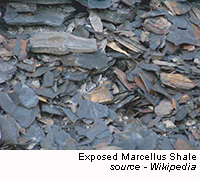 Exposed Marcellus Shale