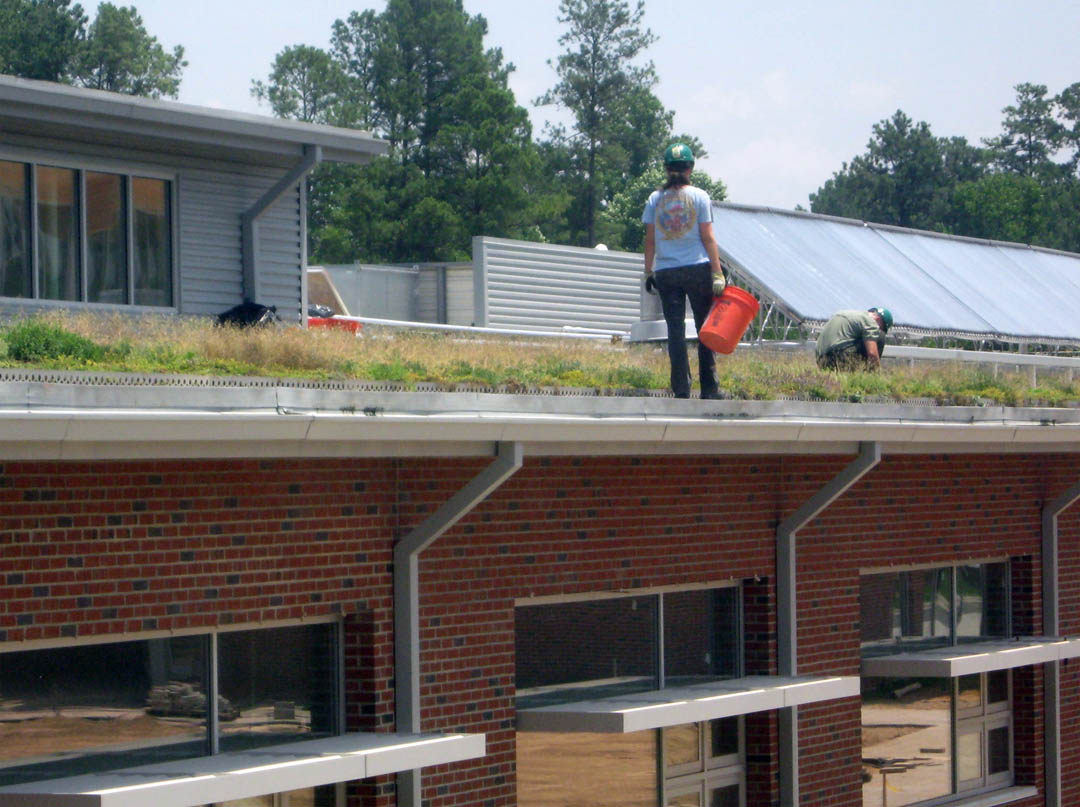 Workmen plant vegetative roof on the new CCCC Sustainable Technologies Center