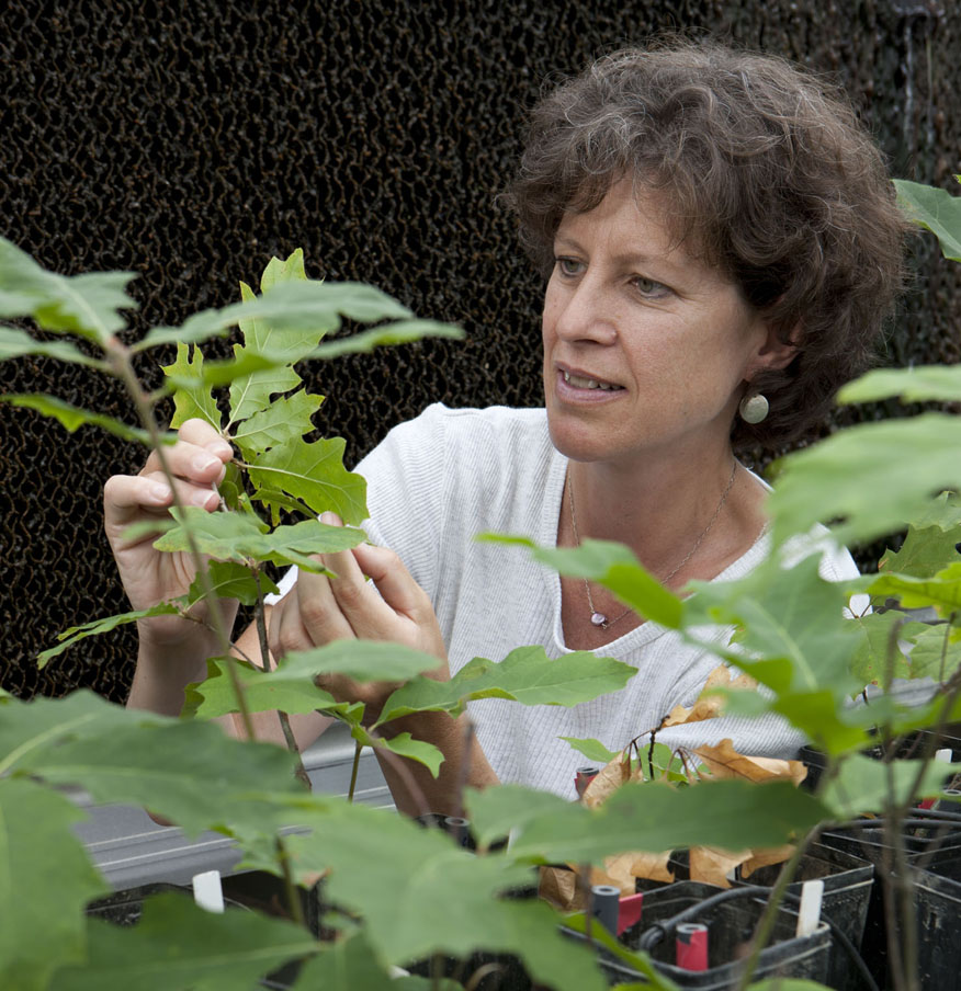 Geosciences Prof. Susan Brantley elected to National Academy of Sciences