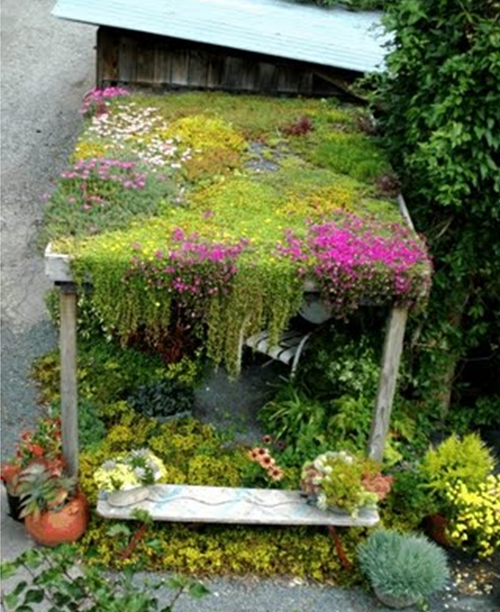 Living-roof and raingarden course