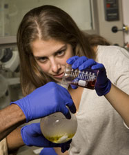 Graduate student Aubrey Francisco works with new biomaterial for cell therapy