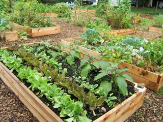 The Sustainability Club's community garden grows