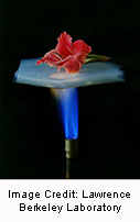 The Flower dramatically demonstrates the superinsulating properties of silica ae
